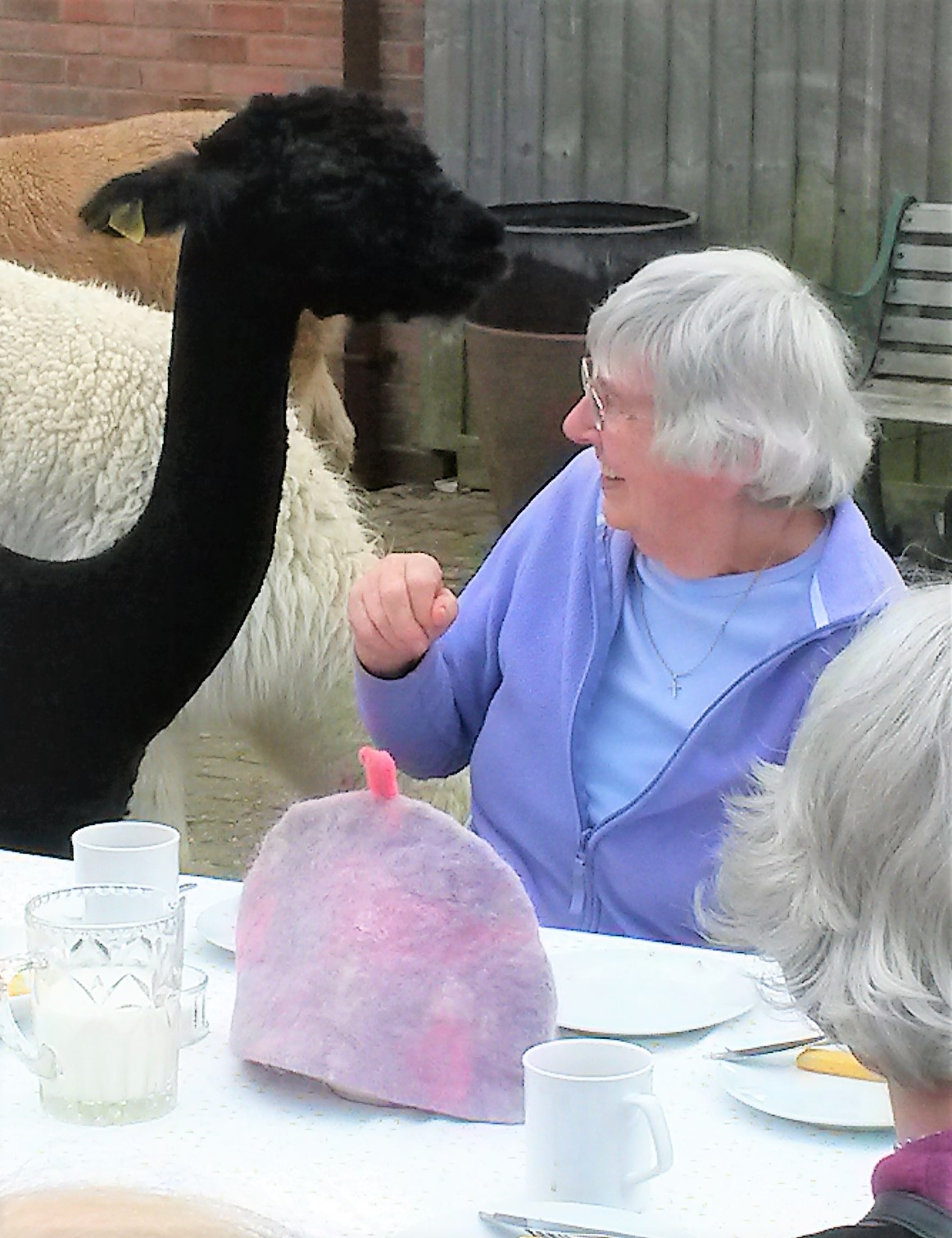 Tea with the alpacas