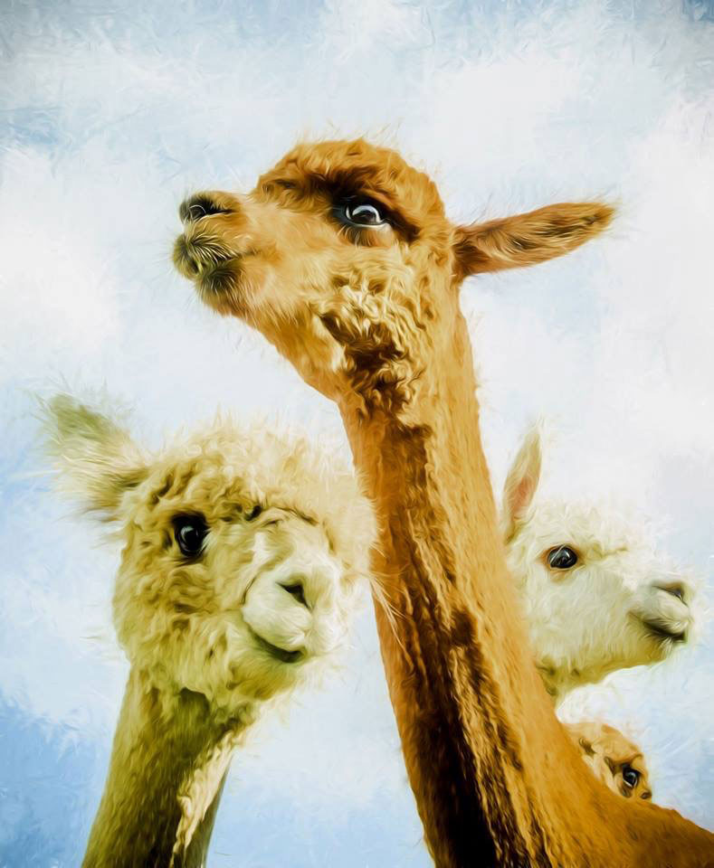 Simply Alpaca Peg Loom